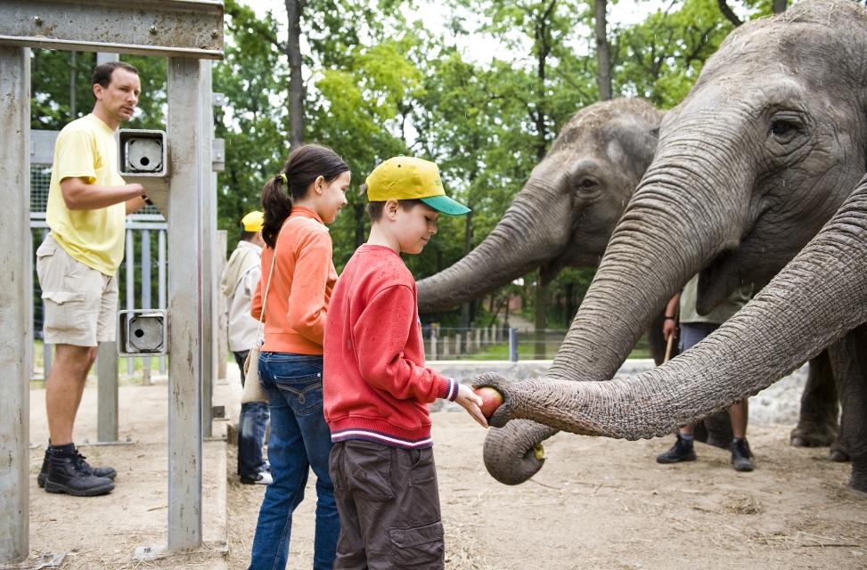 Прогулянка серед диких звірів в угорському зоопарку